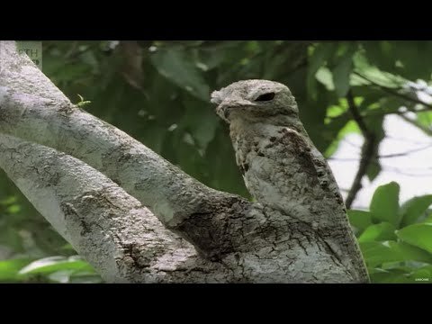 Top 10 Animal Camouflage - Earth Unplugged