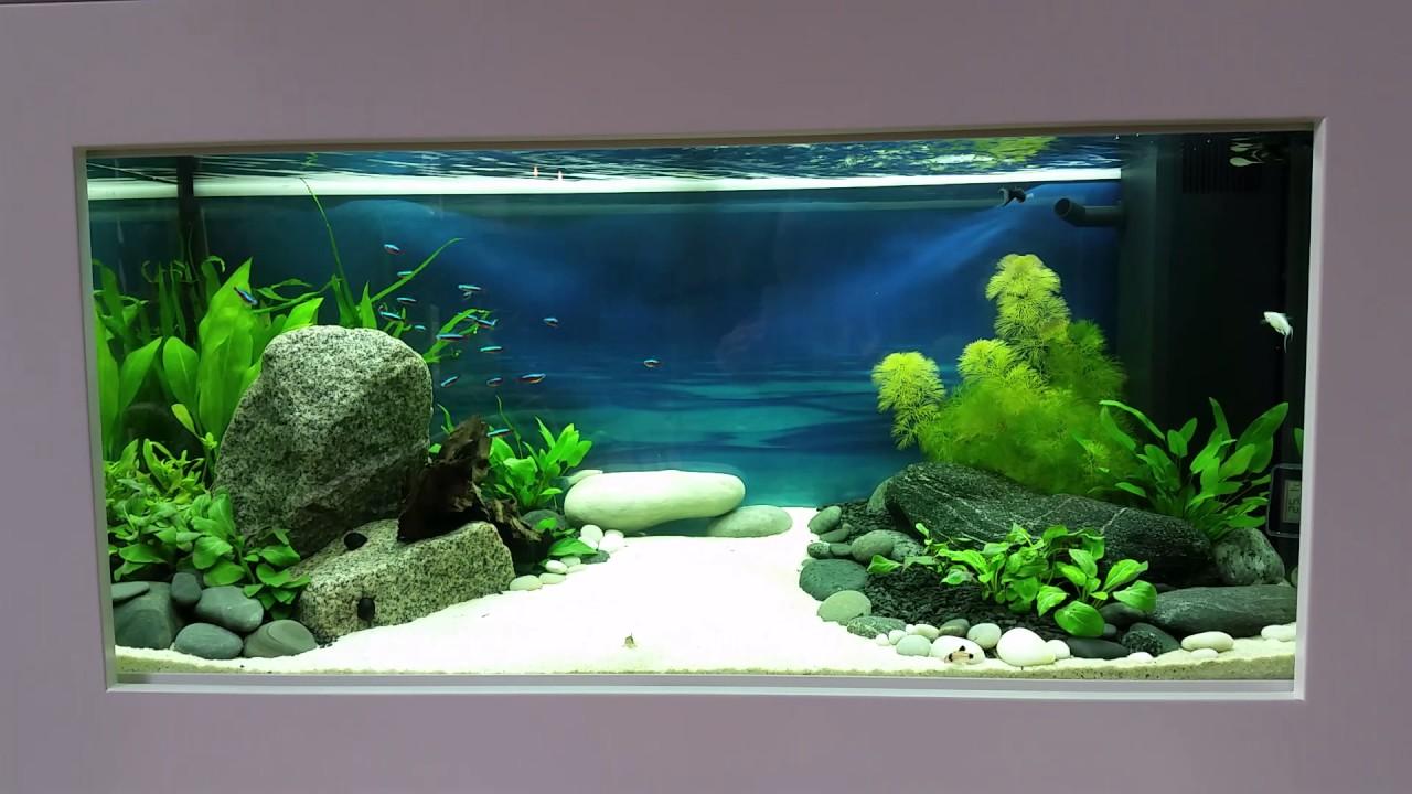 akvarie opstart