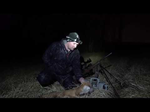 Pennsylvania Predator Hunting At Night