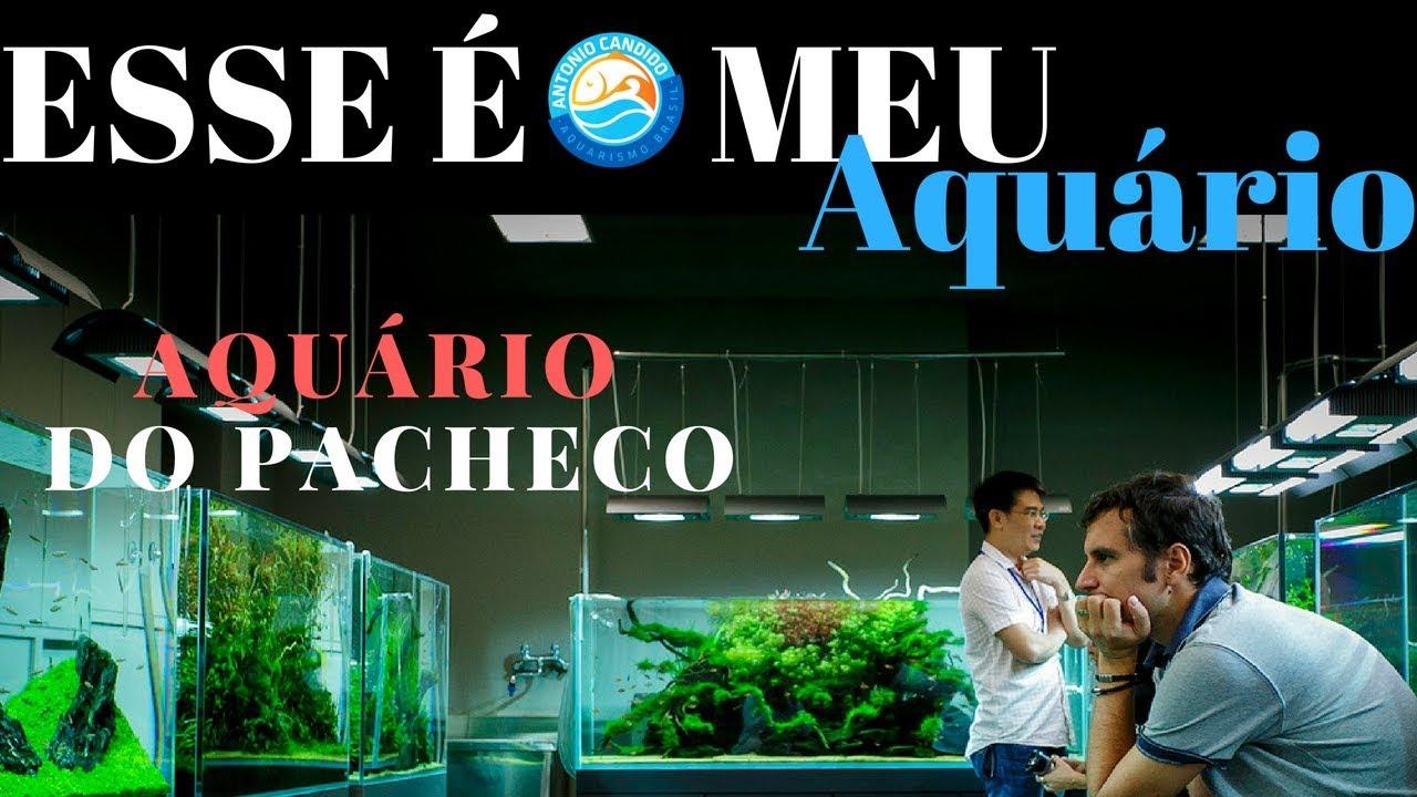 AQUARIO DO JOSE PACHECO DO RIO DE JANEIRO