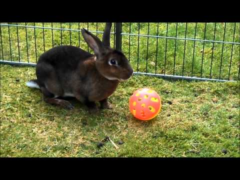 Fairly Beloved Rabbit Care - Chico Time