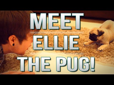 Thumbnail: TDM Vlogs | MEET ELLIE THE PUG! | Episode 17