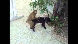 Супер прикольное видео Смешные животные.