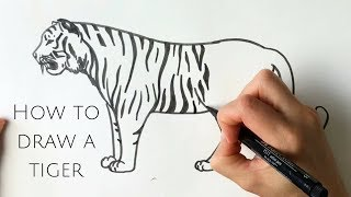 How to draw a tiger standing