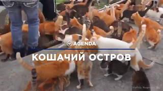 КОШАЧИЙ ОСТРОВ рай для туристов - мир котов. Миллионы кошек в отпуске.