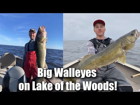 BIG WALLEYES Fishing Lake Of The Woods! Multiple 30 Inchers!