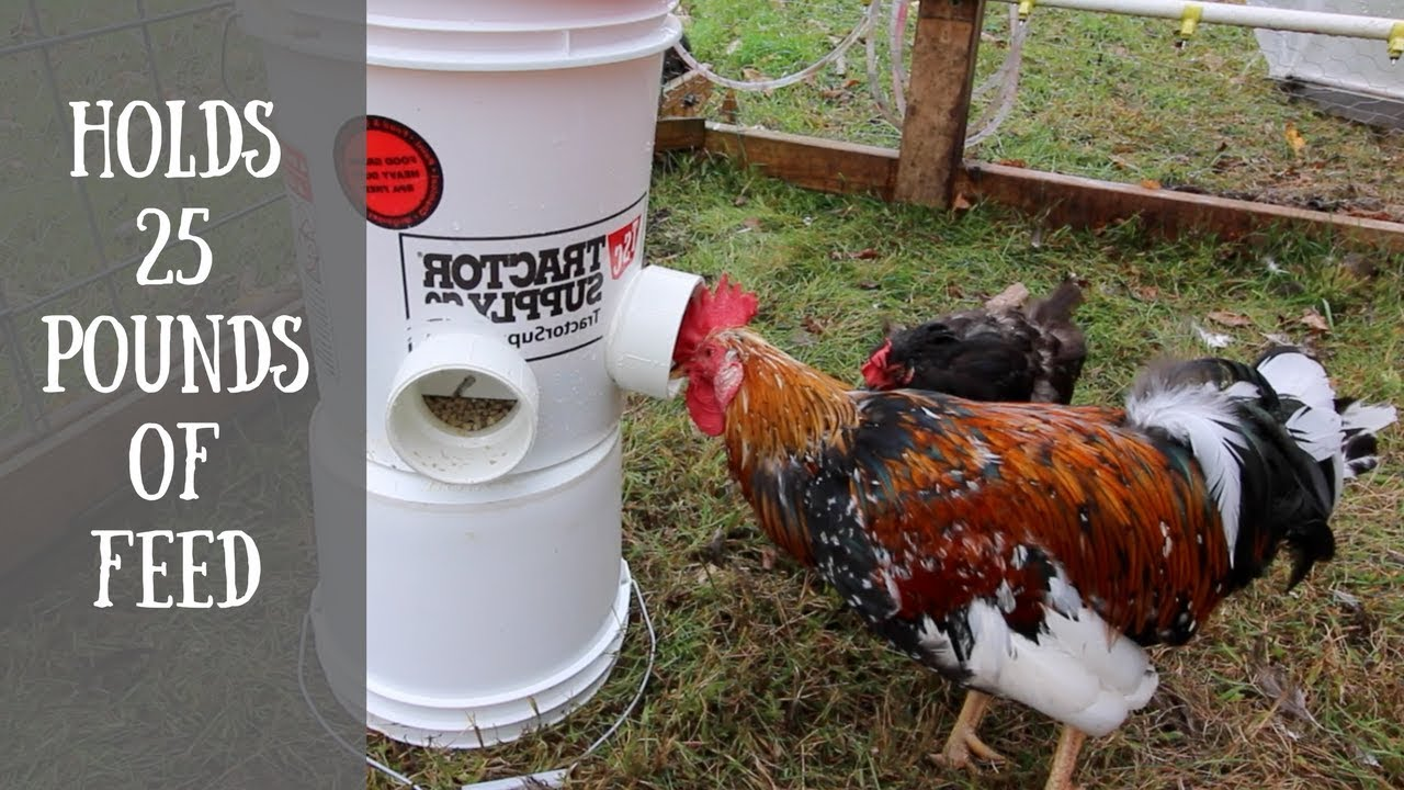 Diy Automatic Chicken Feeder (easiest way to feed your chickens with a  5~gallon Bucket)