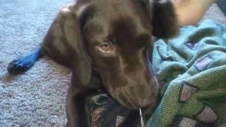 video-2010-11-07 More of Gigi(Big Face)Springador 6 months
