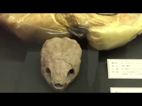 モンゴロケリス Mongolochelys efremovi:「大恐竜展」ゴビ砂漠の驚異