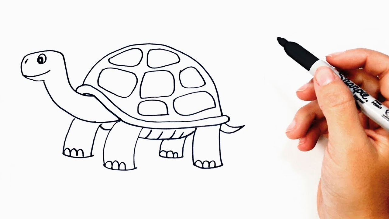 How to draw a tortoise or turtle step by step