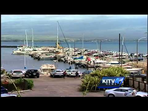 sharks-suspected-to-be-cause-of-maui-tourism-decline