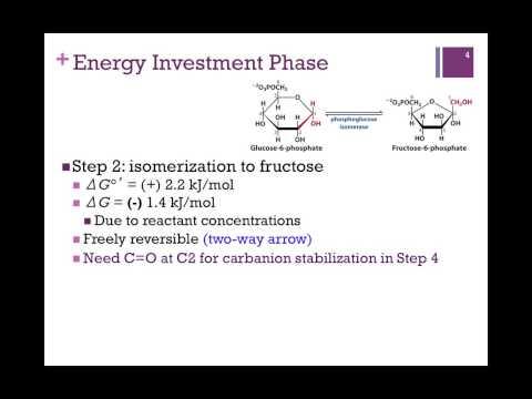 092-Phase 1 of Glycolysis