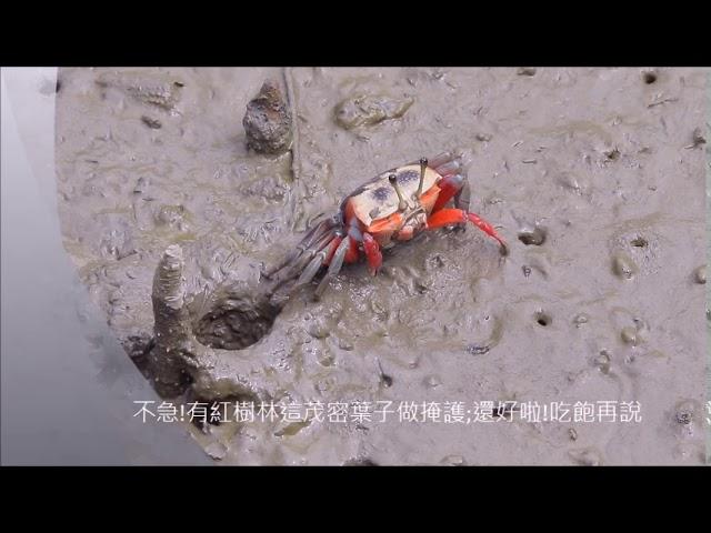 招潮蟹的對話