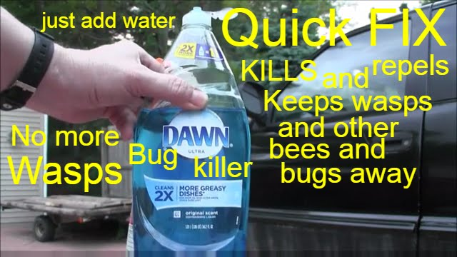 How To Keep Bees Away Youtube