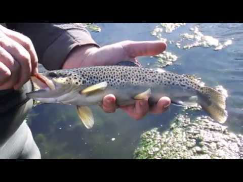 Trout Fishing In The Ozarks - Special Waterways - Creeks
