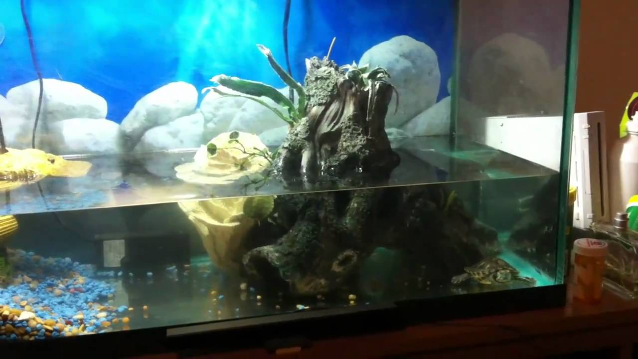 baby turtles new tank - YouTube