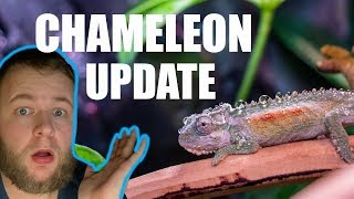 WHAT HAPPENED TO MY CHAMELEONS???