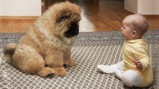 【面白い動画】 かわいい猫 - かわいい犬 - 最も面白いペットの動画 #16