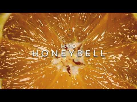 Maxo - Honeybell