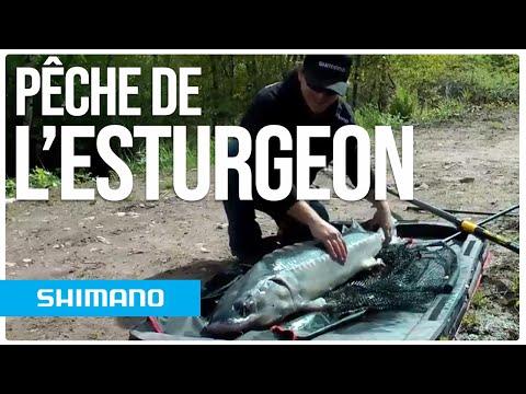 Pêche de l'esturgeon à la grande canne – Nicolas Gavoille   FRANCE
