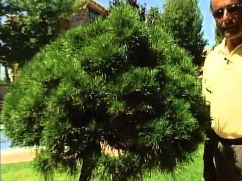 Poda de arbustos - Josemanuel Fernández (Leoplant)