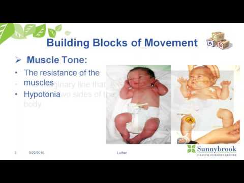 The Building Blocks of Movement