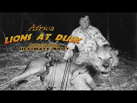 Dangerous hunt Lions at Dusk – dangerous game! lion hunting! – AI enhanced video to HD