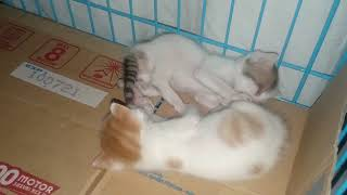 MY Funny KITTENS || PLAYING AND SLEEPING.
