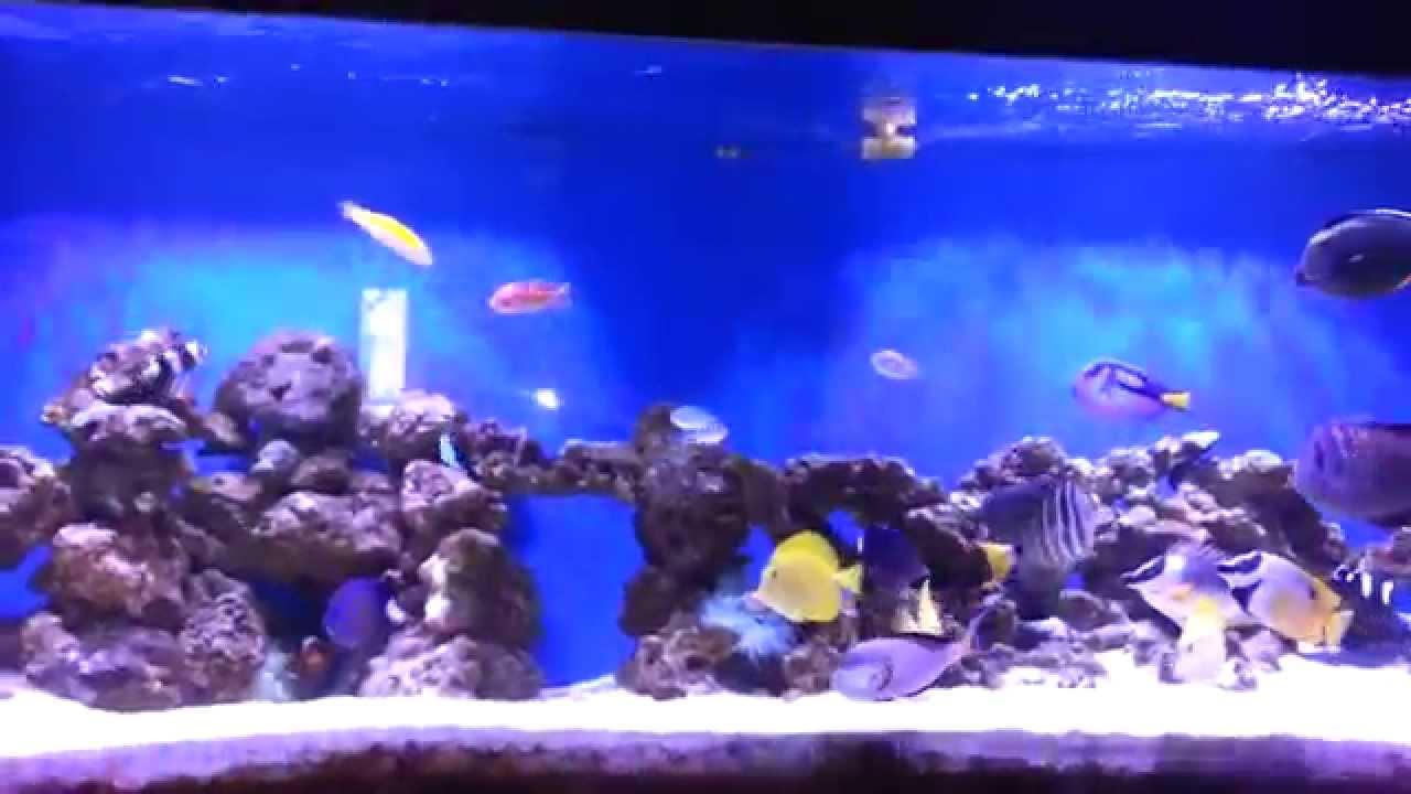 Fish aquarium in ecr -