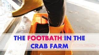THE FOOTBATH IN THE CRAB FARM | RAS Aquaculture