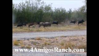 Free Hog Hunts