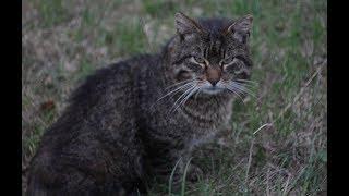 Очередная  трансляция Серого Кота