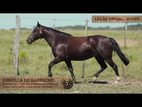 Lote 11 - Fiorella do Garrucho