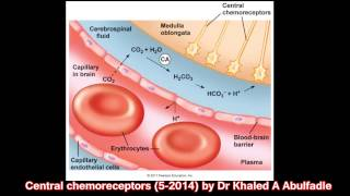 Central chemoreceptors (5-2014) by Dr Khaled A Abulfadle