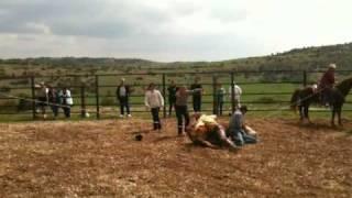 Randal bison, coucher de vache 2
