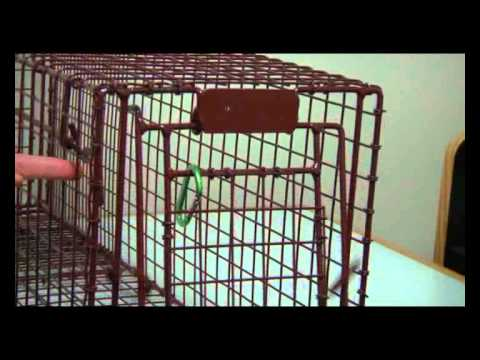 TNR - how to work the cat traps