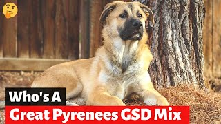 Should you get A German Shepherd Great Pyrenees MixBreed (Shepnees)?