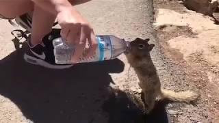 Sincapa su içiren vicdanlı insan