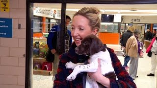 A Look Inside the Animal Humane Society