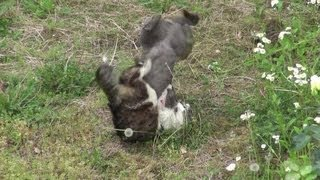激しい猫の喧嘩です。