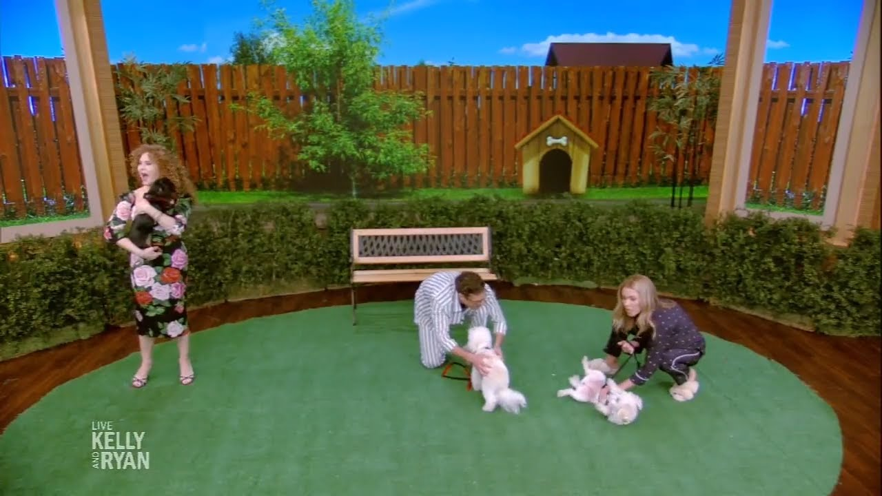 Bernadette Puppies Introduces Dogs up for Adoption