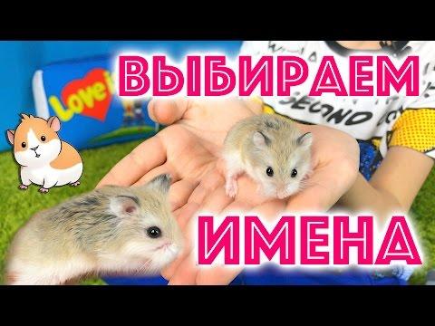 Наши питомцы. Как назвали хомяков Роборовского? Выбираем имена