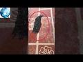 Sinh vật lạ màu đen lúc nhúc di chuyển trên sàn nhà, lại gần mới phát hiện sự thật sởn tóc gáy
