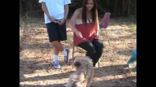 Evana The Pomeranian And Shih Tzu Mix