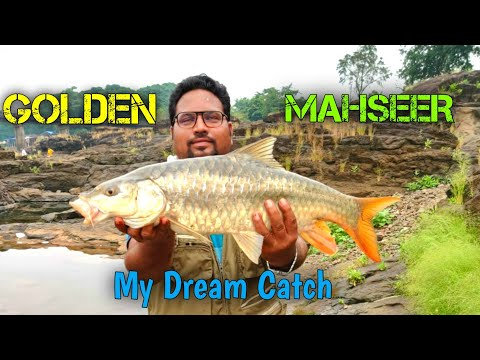 Golden Masheer Fishing In India | Mahseer Catch And Release | Amazing Fishing Technique