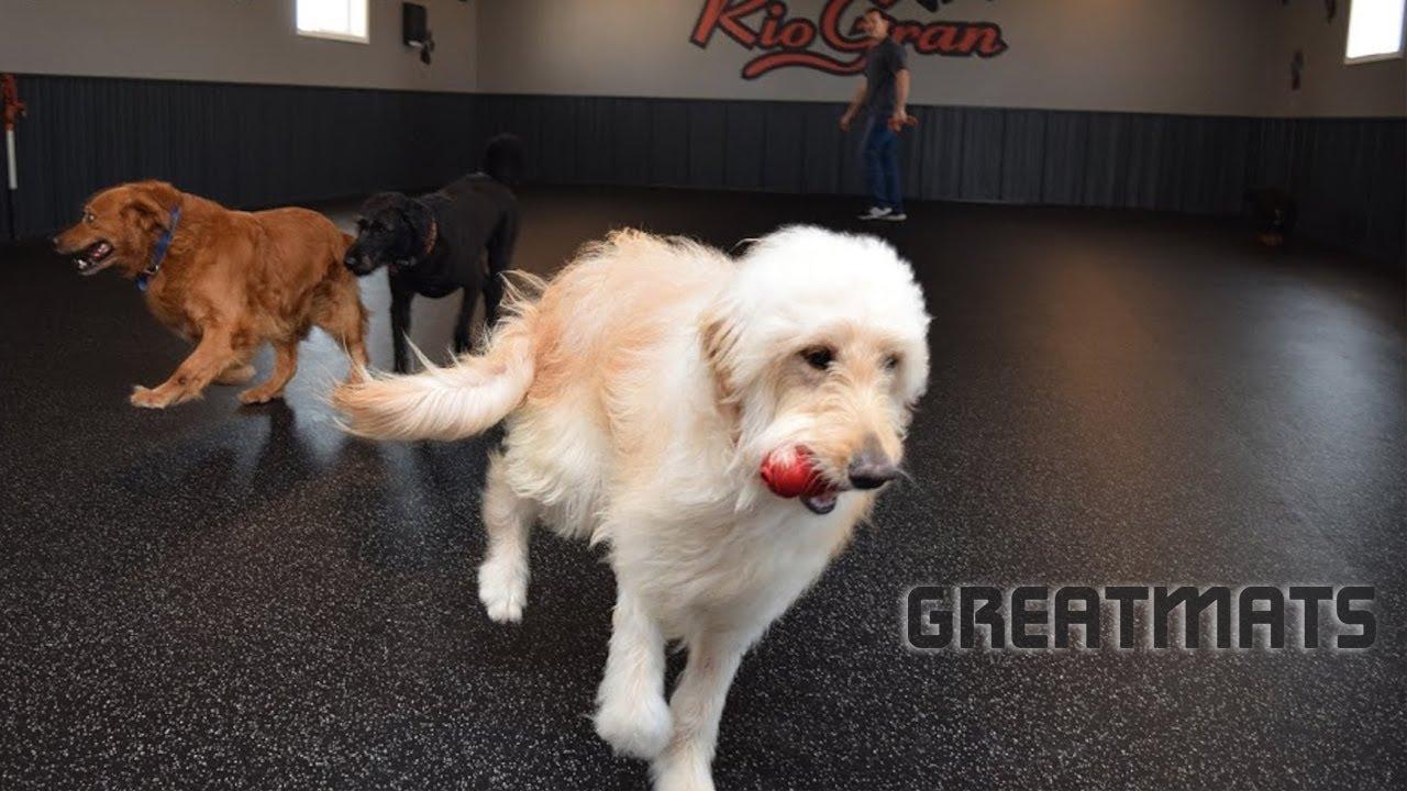 Elite Dog Flooring By Greatmats