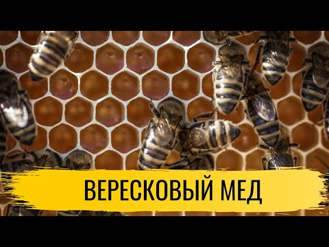 Полезные свойства верескового меда