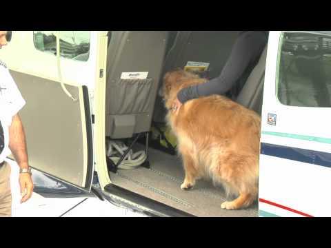 Seair Seaplanes - Plane & Pilot Safety News - Vancouver Island - British Columbia - Canada