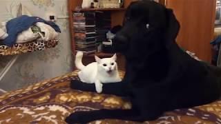 Love Лабрадоры. Лабрадоры самые смешные и весёлые собаки!