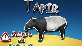 Tapir o Danta  Animales del Mundo  (Especial peligro de extinción)
